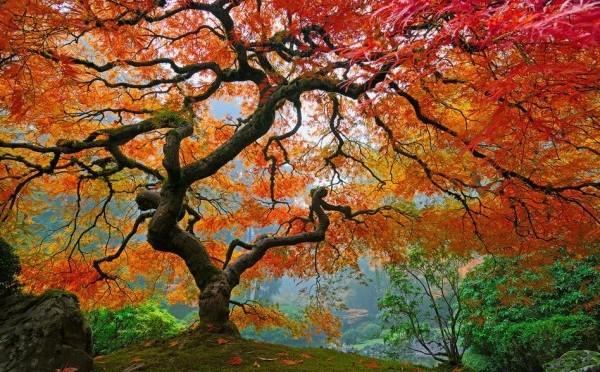 Remonte dans ton arbre