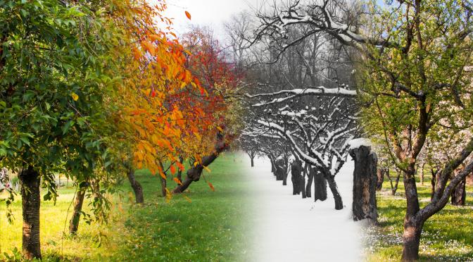Atelier Guéris Sage d'automne  «Je fais confiance à mon intuition»